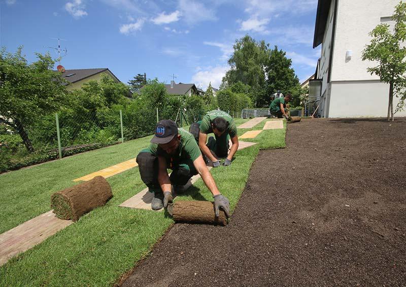 Rollrasen wird verlegt auf Rasensubstrat