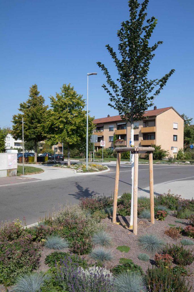 Straßenbaum Baumsubstrat