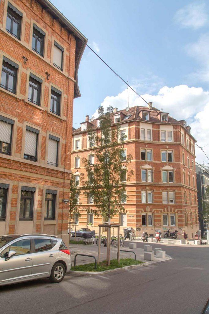 Stuttgart Sued Straßenbaum